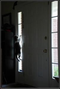 anne-cat-sidelight