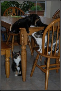anne-cats-table