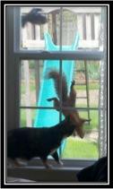 cat-window-anne