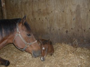 casey-and-her-foal