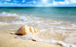 seashell-Beach-Wallpaper-HD3